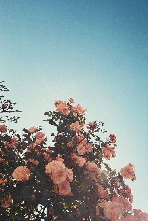 Aesthetic Pretty Flower Wallpapers
