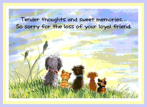 Losing Your Best Friend Google Search: Words Of Comfort For Loss Of Dog - Google Search