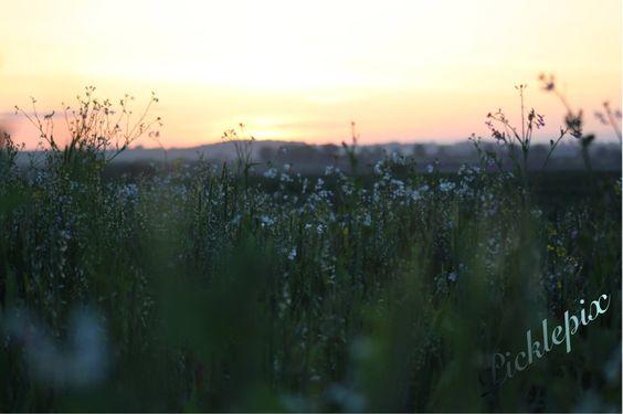 Sunrise across the field