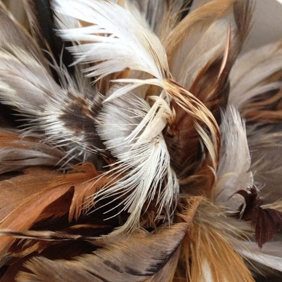 Plumas - @conluismartinez- #webstagram