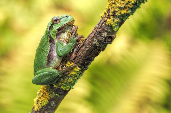 Tree Frog by Dirk Seifert on 500px