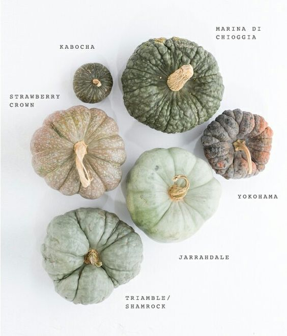 Squash. TYPES OF PUMPKIN. THIS IS A GREAT GRAPHIC ILLUSTRATION