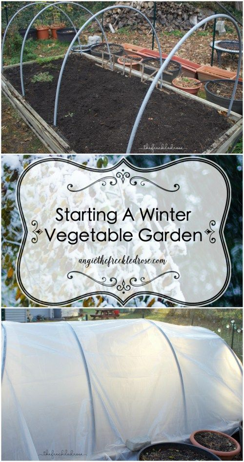 Starting a winter vegetable garden angie the freckled for Starting a vegetable garden