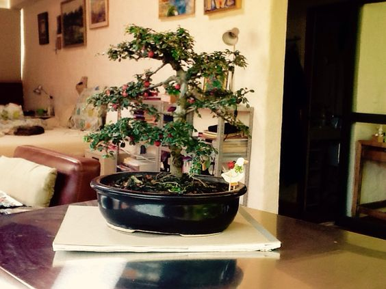 #jardin  #bonsai
