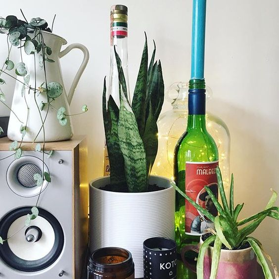 Pro tip: If you sneak in an astronaut themed wine bottle to your candle/houseplant vignette, your minimalist but geeky partner may not notice just how many candles and plants you have 😂 #notaminimalist #planthoarder . . . . . . . . . . #urbanjunglebloggers #abmathome #acolorstory #dslooking #abmplantlady #myhappyplace #myhappyhome #myhome #insidemyhome #vignette #aloe #stringofhearts #candleaddict #ihavethisthingwithplants #crazyplantlady #houseplantsofinstagram #houseplantclub #houseplantlover