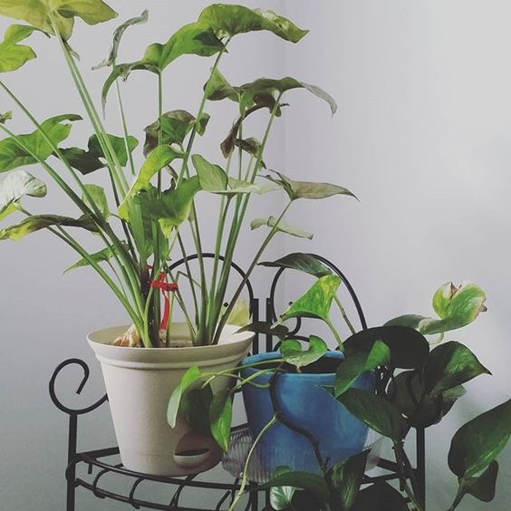 Just a few of my plants in my collection! #karmabloggers