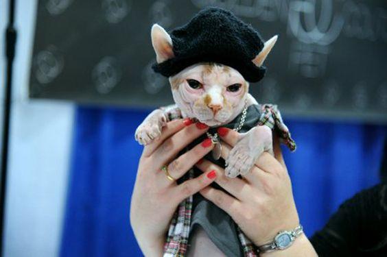 Cat Fashion Week.