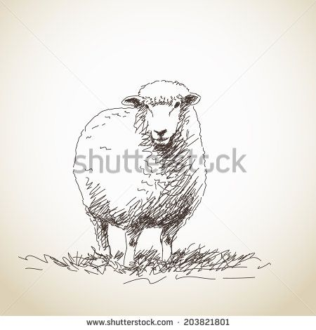 Sheep Stock Photos, Images, & Pictures | Shutterstock