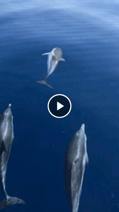Golfinhos dando show em alto mar
