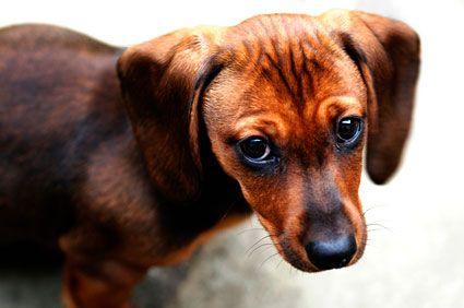 El efecto de un abrazo en un perro maltratado