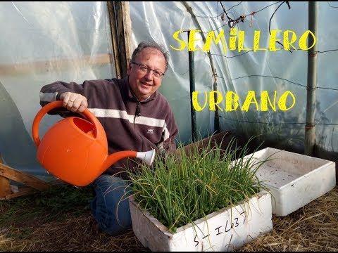 Cuidados Del Semillero Urbano De Cebollas Huerto Facil Cultivo De Hortalizas Semillero Huerto