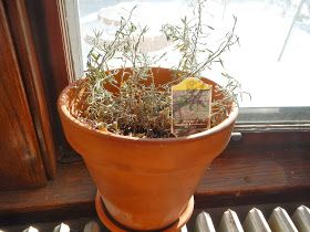 Day by Day Homesteading: 8 Tips for Growing Indoor Herbs in the Winter