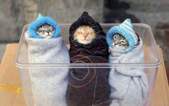 They all look so warm and cozy!