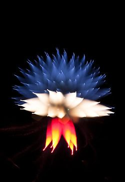 Long exposure fireworks (refocus during exposure)  This one looks like a jellyfish… I love the colours though