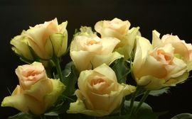 Изображение Розы, Rose, Цветы, Flowers, Макро, Close-Up. Цветы и Растения | Фабрика картинок - PicsFab.com. Обои для рабочего стола:
