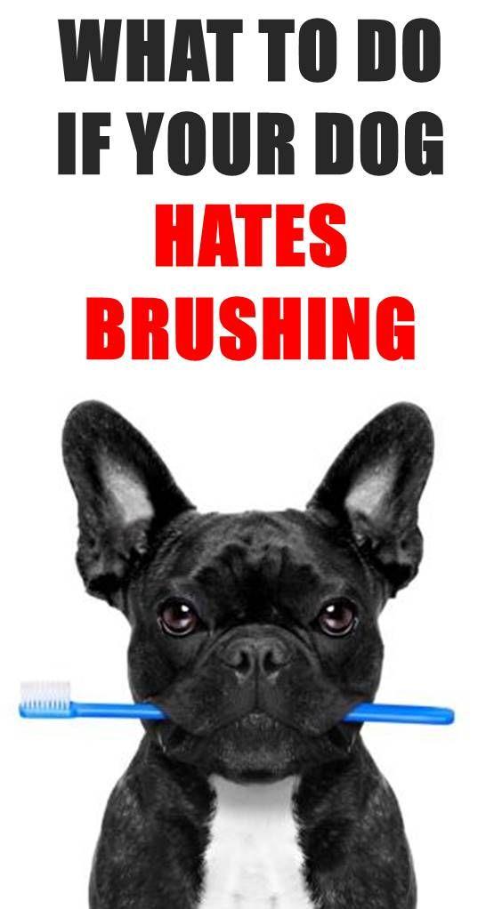 Pin By Nancy Miller On Dog Teeth In 2020 Dog Teeth Your Dog Dog Teeth Cleaning