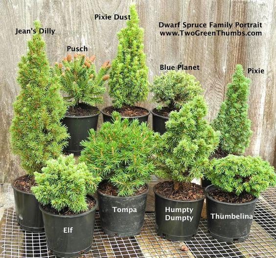 New Miniature Garden Plants for Indoor or Outdoor