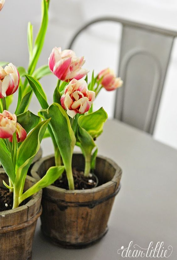 Tulips are some of my favorite flowers!