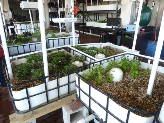 Growing plants urban and hydroponics on pinterest for Hydroponic grow bed