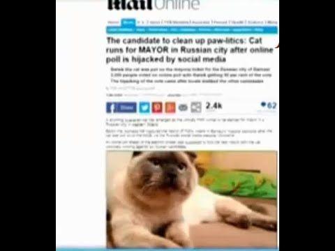 قطة تصبح نائب في البرلمان شي مسخرة عالآخر Cool Cats Cats Animals