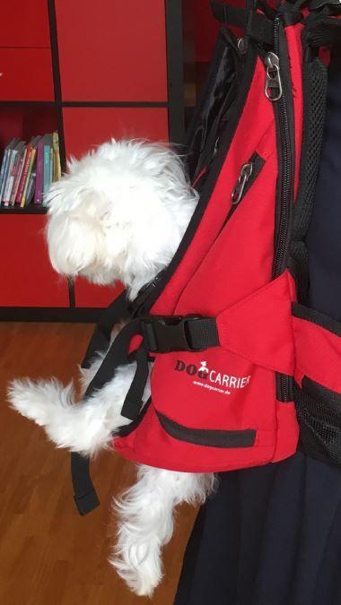 Hundetragetasche Rucksack Fur Hunde Hunderucksack Bis 30kg Hunderucksack Hundetragetasche Rucksack Fur Hunde