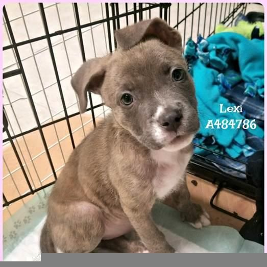 Petharbor Com Animal Shelter Adopt A Pet Dogs Cats Puppies Kittens Humane Society Spca Lost Found Animal Shelter Humane Society Spca