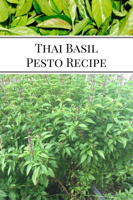 Thai Basil Pesto | Nourishing Pursuits | We had a whole LOTTA Thai ...
