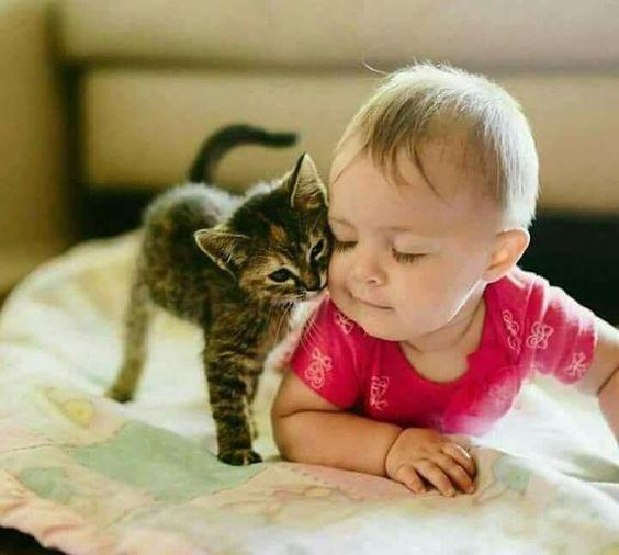 La complicité d'un chat et d'un bébé <3    MonChatDoré