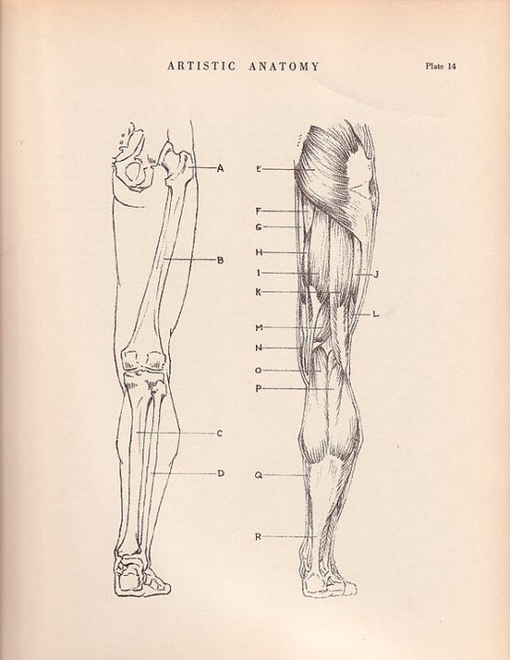vintage print human anatomy illustration 1941 wall art by agedpage, Muscles