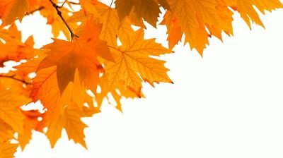autumn leaves falling - Google Search