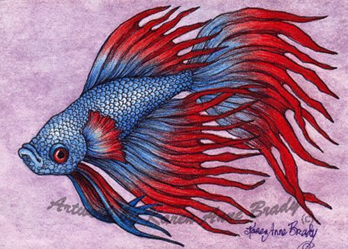 Betta siamese fighting fish and siamese on pinterest for Betta fish painting