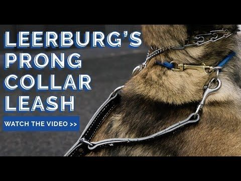 When Used Properly And Maintained Prong Collars Rarely Come Undone However In The Event The Links Do Separate We Want T Prong Collar Collar And Leash Prong