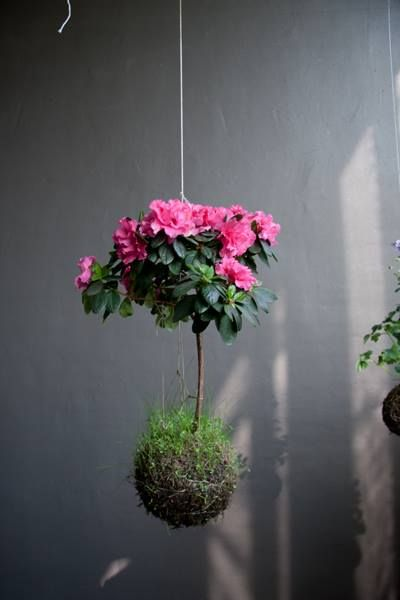 jardins suspensos