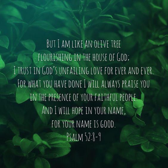 Psalm 52:8-9