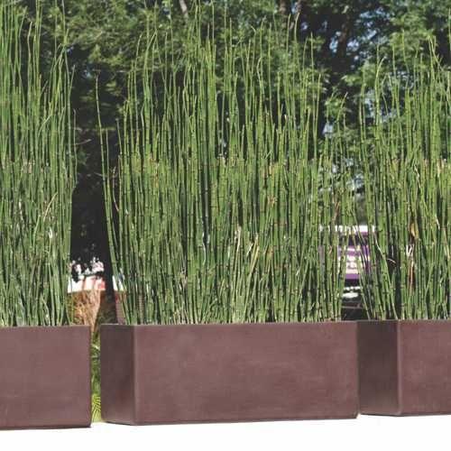Jardineras macetas minimalistas de fibra de vidrio meue for Jardines minimalistas con bambu