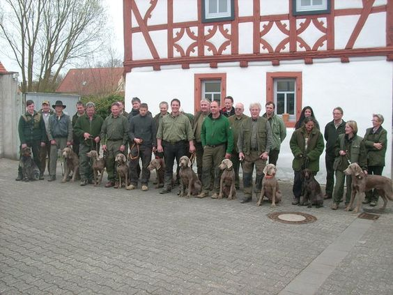 Weimaraner Klub LG Hessen: 10 junge Vorstehhunde bestehen VJP 2013 um Gabsheim