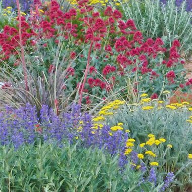 Providing eco friendly beautiful plants that will enrich your gardens and landscapes. Visit our garden catalog for drought tolerant plants, perennials and more