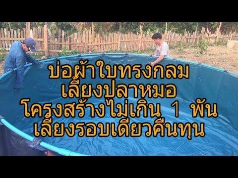 การเล ยงปลาไหล ในบ อผ ายาง ไม ใส ด น Youtube กบ