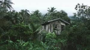 Resultado de imagen para selva