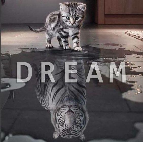 Image result for kitten big tiger