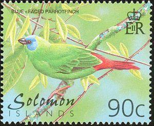 Blue-faced Parrotfinch (Erythrura trichroa)