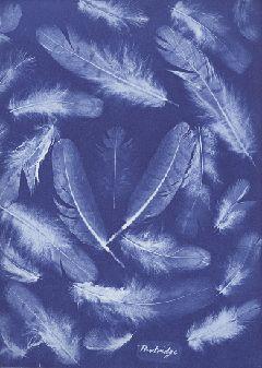 Anna Atkins: The First Woman Photographer - cyanotype
