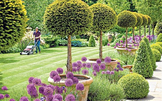 Alan Titchmarsh's alliums - from his Secret Garden book which I read this weekend - absolutely engrossing.