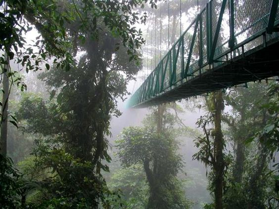 Monteverde Cloud Forest Reserve in Monteverde, Costa Rica. A tropical rainforest with very high biodiversity.
