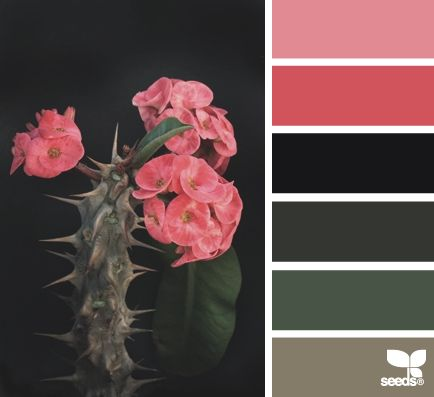 cactus tones via Design-Seeds | Warm, embracing, blushing, but not coming on too strong. A palette for a high Love value. Commentary via The Voice Bureau at AbbyKerr.com