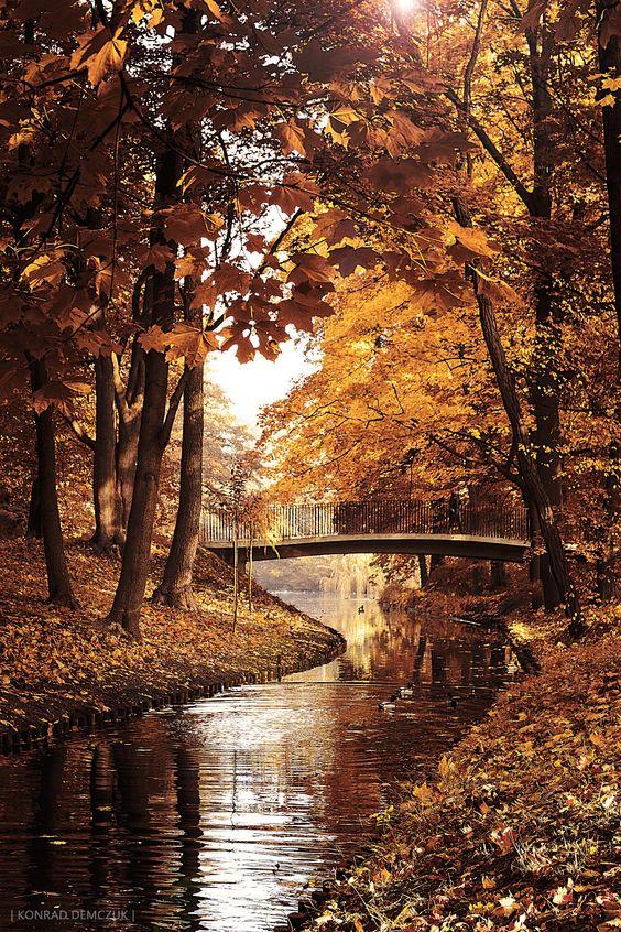 warm autumn by Konrad  Demczuk on 500px