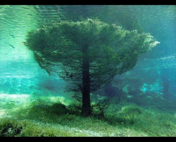 Uma árvore pode sobreviver até 12 horas submersa