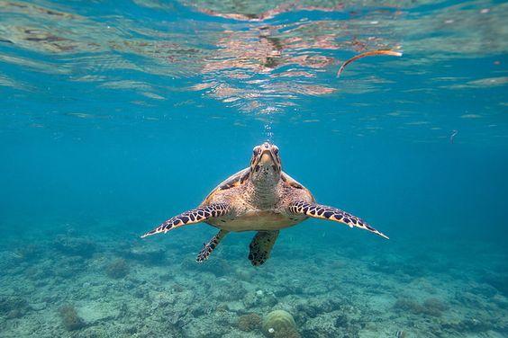 Free The turtle, gili meno, Lombok utara, Nusa Tenggara Barat, Indonesia