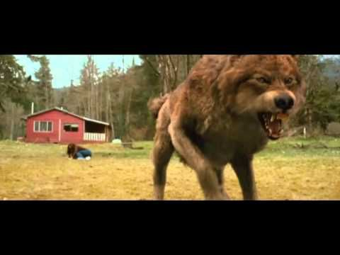Jacob Black - Animal I Have Become - The Twilight Saga