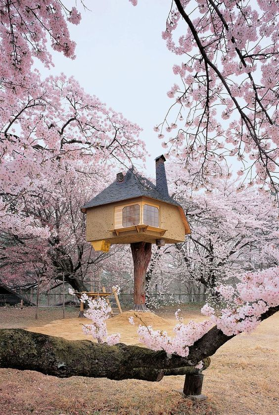Have Japanese tea at the Teahouse Tetsu Its a teahouse in a tree It was designed by architect Terunobu Fujimori and sits among the cherry blossoms in Hokuto City Japan